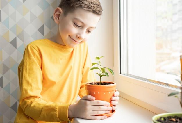 O menino cuida de plantas domésticas no parapeito da janela em casa