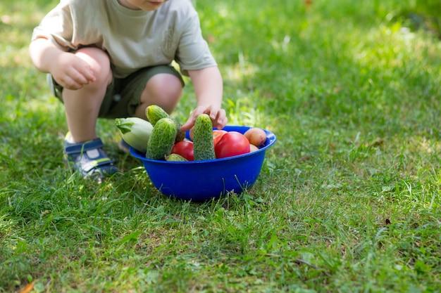 O menino está segurando uma tigela com uma colheita de verão de vegetais