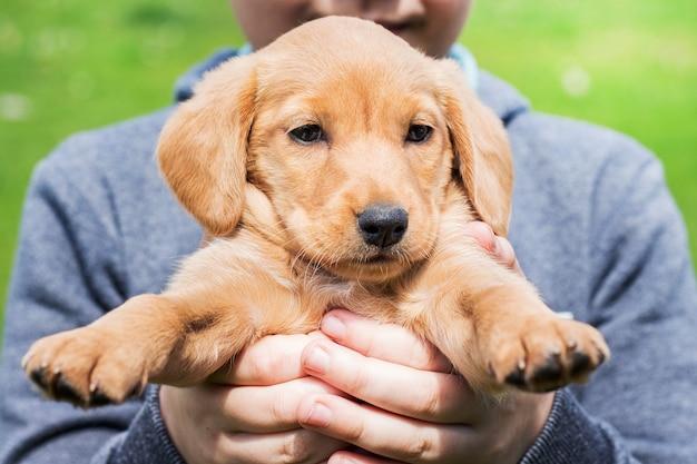 O menino tem nas mãos um pequeno filhote de cachorro da raça cocker spaniel_