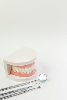 O modelo do dente no fundo branco para o índice dental.
