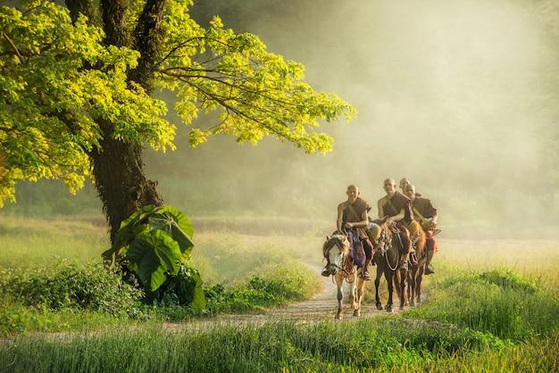 O monge budista com o robe marrom monta o cavalo e pede esmolas (despercebido em tailândia), uma árvore ao lado da maneira que os povos que montam cavalos no countrysid em chiangrai, tailândia