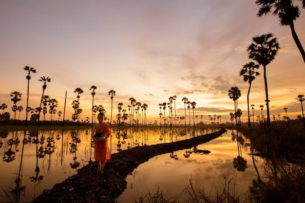 O monge iniciante caminhava pela orla dos campos de arroz pela manhã para cumprir a missão dos monges à luz dourada da manhã.