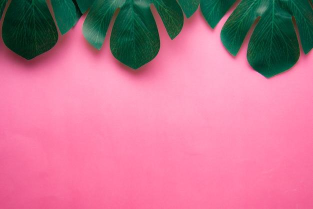 O monstera tropical sae no fundo cor-de-rosa, copie o espaço para o texto.