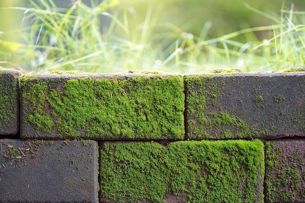 O musgo verde escuro que cresce naturalmente no concreto é refrescante.
