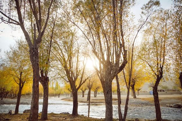 O nascer do sol iluminou a floresta colorida na estação do outono. rio que flui através de árvores de folhas amarelas.