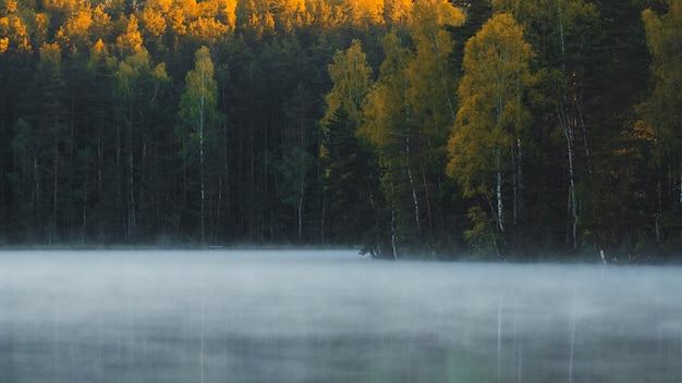 O nevoeiro flutua sobre o lago na floresta de outono no início da manhã ao nascer do sol