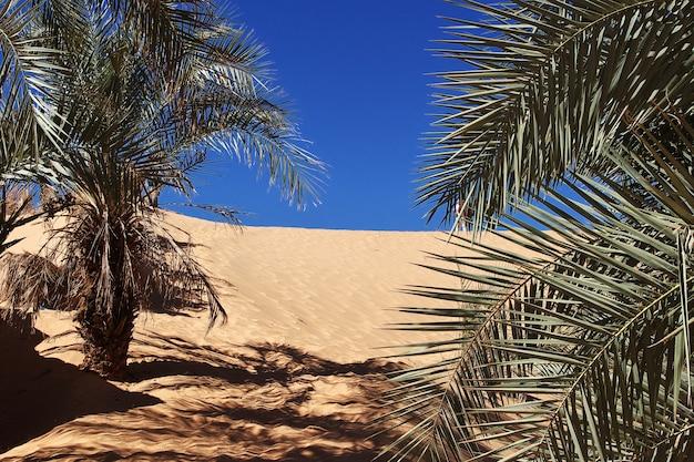 O oásis em timimun, cidade abandonada no deserto do saara, argélia