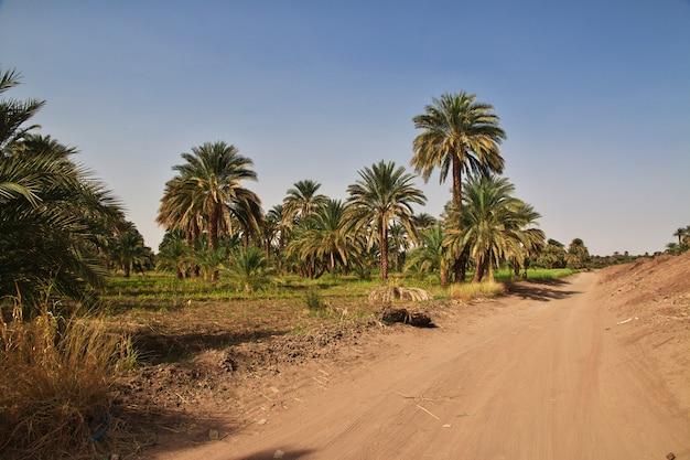 O oásis no deserto do saara, sudão