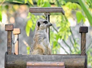 O observador, animal
