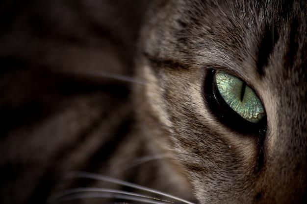 O olho verde de um gato no escuro olhando