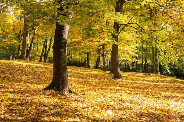 O outono amarelo em um beco no parque da cidade