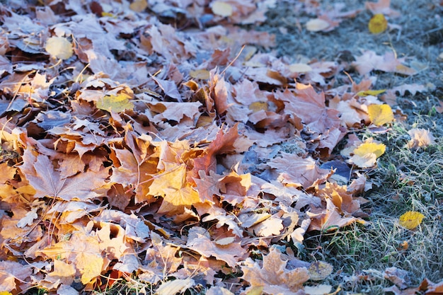 O outono com folhas na geada