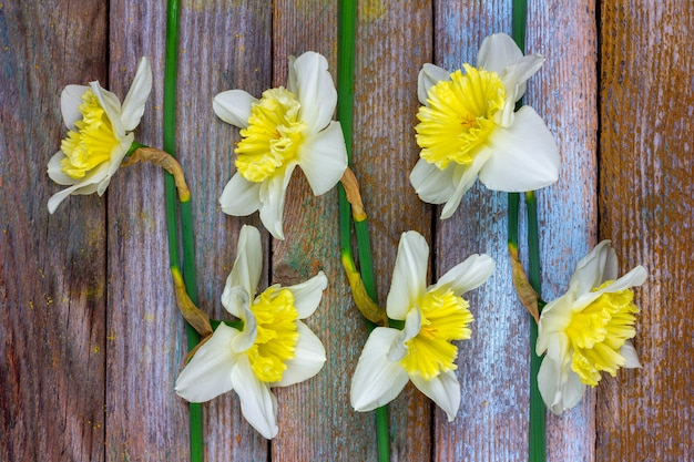 O padrão de narcisos de flores no fundo de madeira retrô