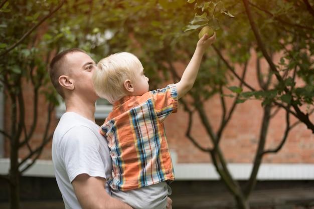 O pai e o filho estão colhendo maçãs. jardim ao fundo