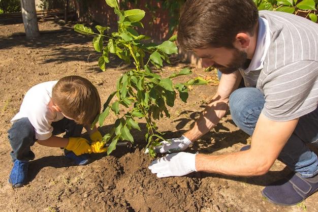 O pai e um filho plantam uma pequena árvore