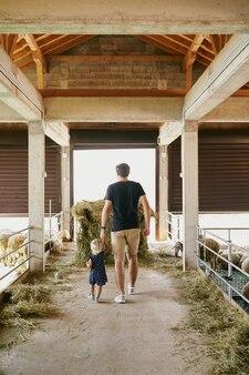 O pai e uma menina caminham pela fazenda passando pelas cercas das ovelhas