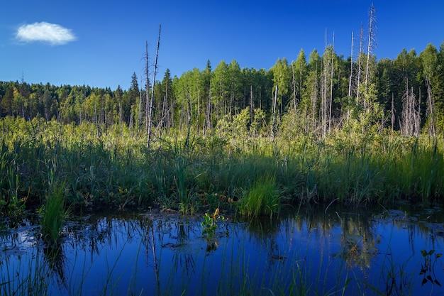 O pântano da tundra no norte da península de kola