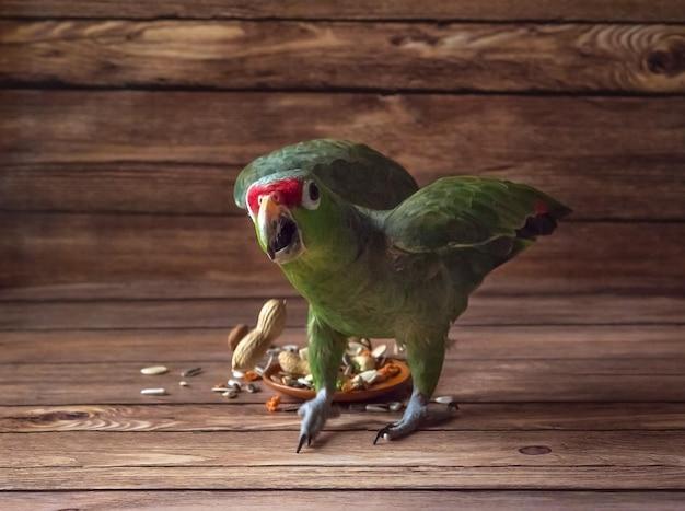 O papagaio ataca. papagaio verde com raiva amazônia.