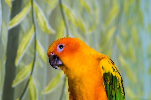 O papagaio é brilhantemente amarelo colorido senta