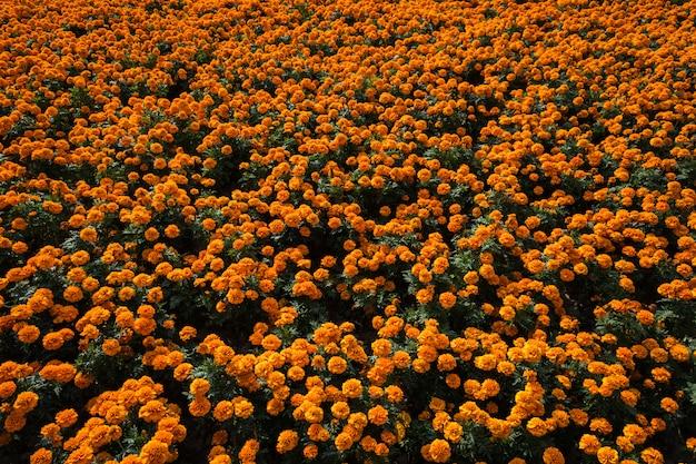O pardal senta-se em uma cama de flores de laranja