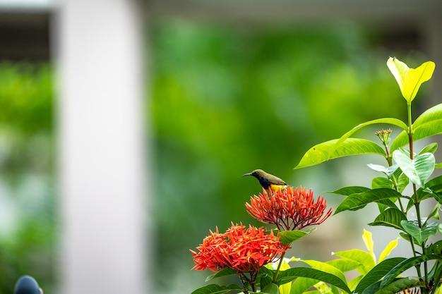 O passarinho está de pé e comendo carpelo de flor vermelha espiga.