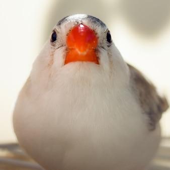 O passarinho está olhando para a câmera.