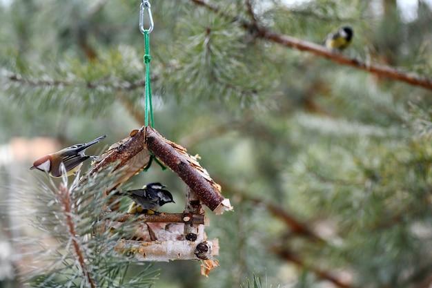 O pássaro come do alimentador. o pássaro come gordura no inverno. o pássaro come pão branco.