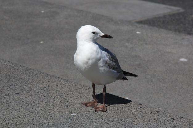 O pássaro em auckland, nova zelândia