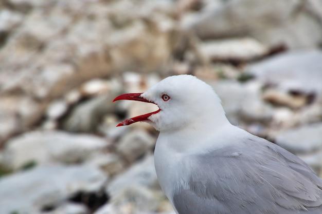 O pássaro em kaikoura, nova zelândia