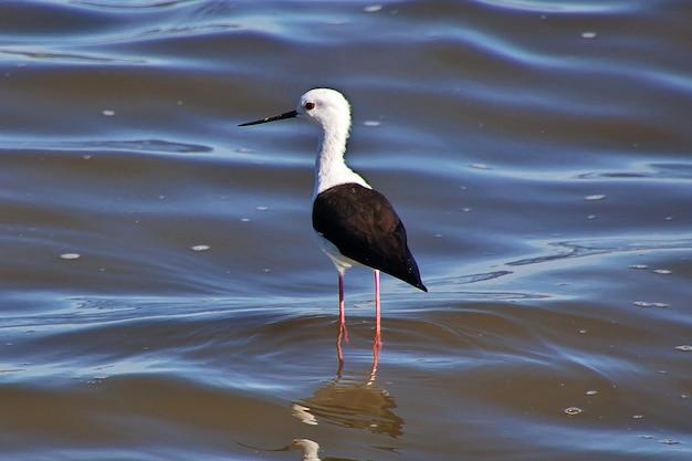 O pássaro na água do lago, áfrica