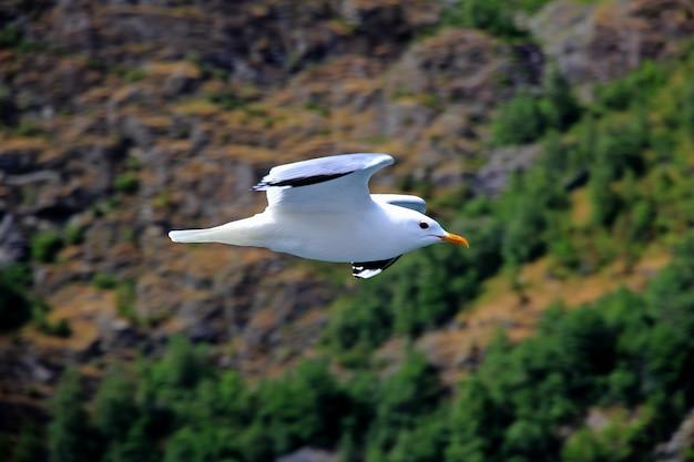 O pássaro no cruzeiro no sognefjord e aurlandsfjord, noruega