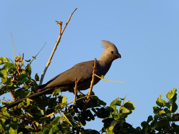 O pássaro no safari no parque nacional de chobe, botswana, áfrica