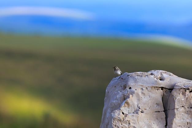 O pássaro senta-se na beira de um penhasco, fotografado no norte do cáucaso, na rússia.