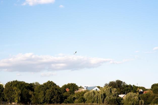 O pássaro voa contra o céu azul