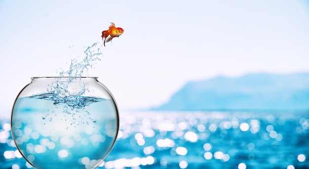 O peixe dourado salta do aquário para se jogar no mar