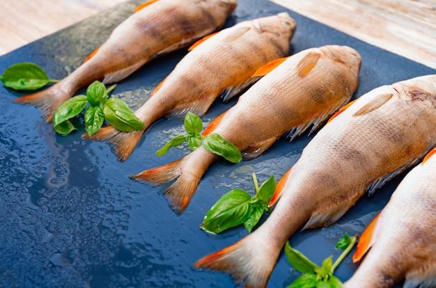 O peixe fresco encontra-se em um fundo escuro, ramos da manjericão verde, vista superior. poleiro de rio para o almoço.