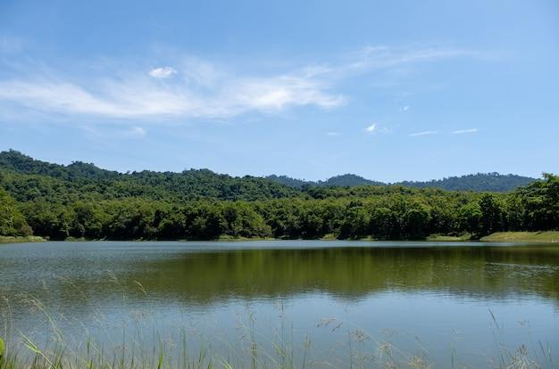 O pequeno lago tranquilo do reservatório com a flor da grama em primeiro plano em um vale em meio aos prados e florestas do parque nacional durante o verão, vista frontal com o espaço da cópia.