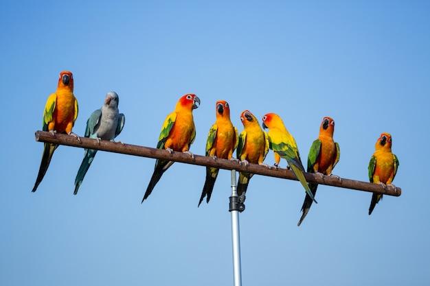 O pequeno papagaio está na madeira.