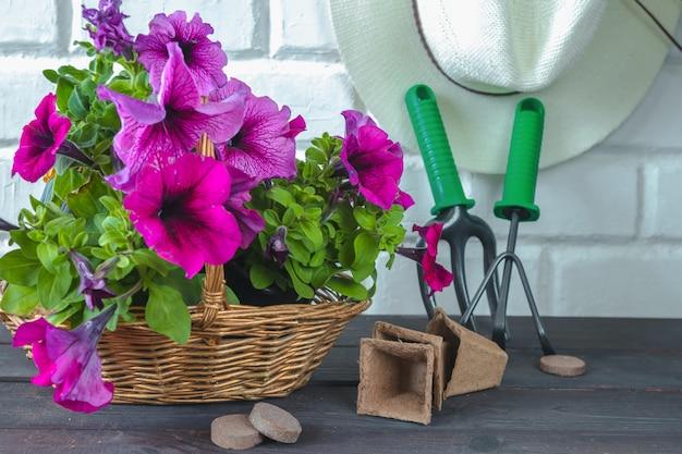O petúnia floresce em uma cesta, em um chapéu de palha e em ferramentas de jardim em um fundo de madeira.