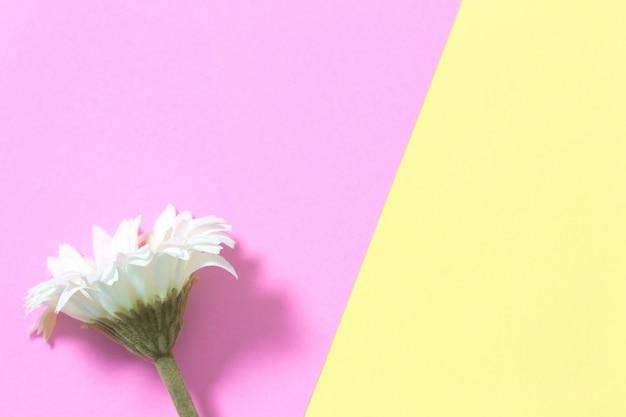 O plano da flor coloca no fundo pastel com espaço da cópia. filtro de efeito suave. conceito mínimo.