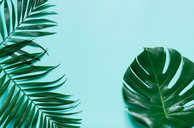 O plano verde coloca ramos de folha de palmeira tropicais no fundo azul ciano. espaço para texto, cópia, letras.