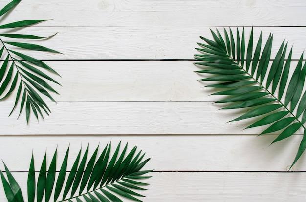 O plano verde coloca ramos em folha de palmeira tropicais no fundo branco das pranchas de madeira. espaço para texto, cópia, letras.