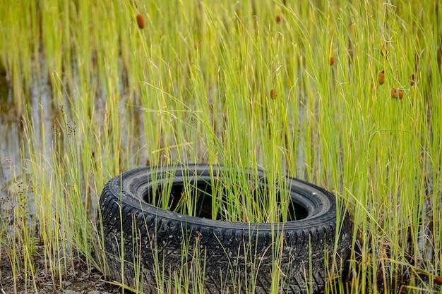 O pneu velho da lagoa está coberto de grama.