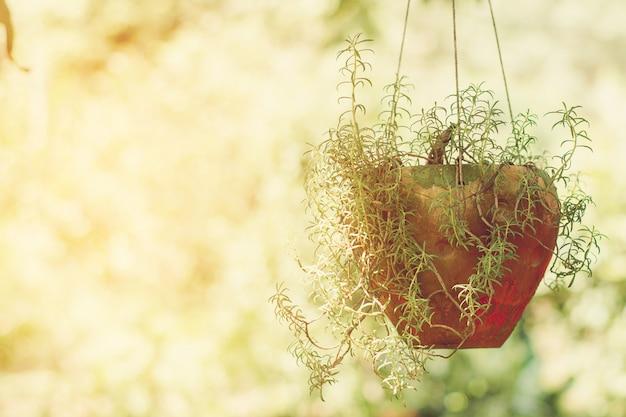 O potenciômetro comum da árvore da flor do purslane que pendura no fundo da natureza.