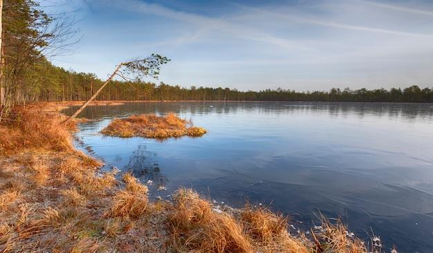 O primeiro gelo transparente no lago do norte da floresta no final do outono em novembro. primeiras geadas