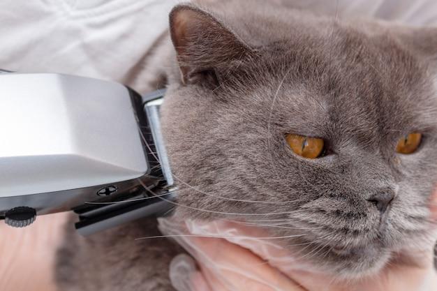 O processo de preparar um animal de estimação com uma máquina de cortar cabelo