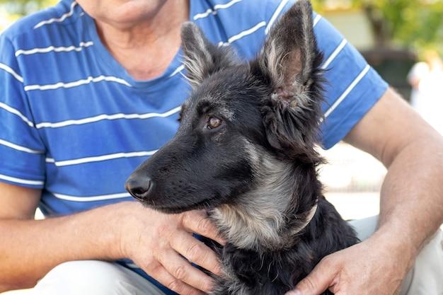 O proprietário abraçou um jovem cão da raça pastor do leste europeu, pessoas e animais