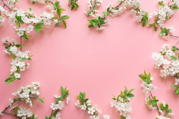 O quadro da flor branca das frutas da mola ramifica na cor-de-rosa. floral. vista de cima, leigo plano. fundo copyspace