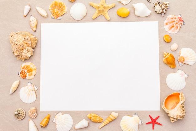 O quadro das conchas do mar e o papel em branco branco cobrem o fundo. cartão, nota, documento, vista superior