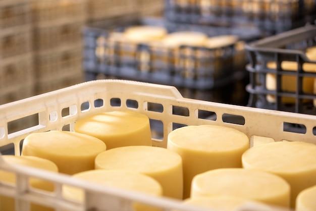 O queijo arranjou nas caixas no armazém da fábrica de queijo.